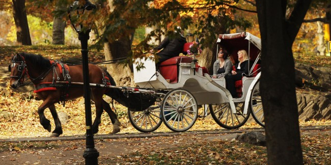 NYC Carriage Horses in Central Park,  (Photo by Spencer Platt/Getty Images)